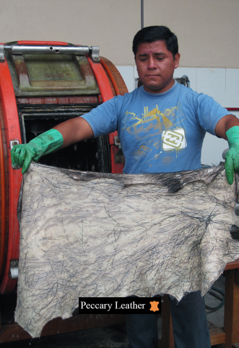 Peccary Skins After The Tanning Process