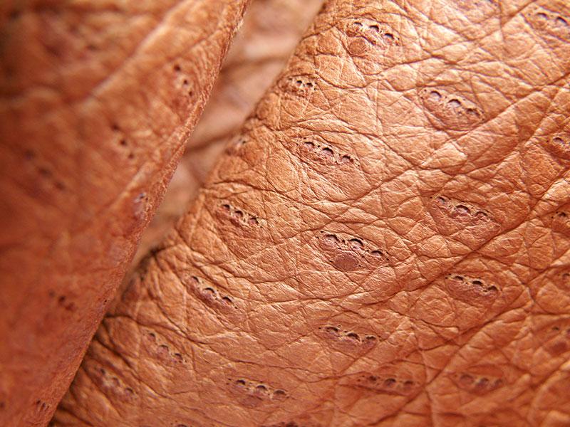 cuero de peccary y detalles