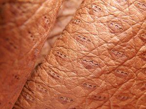 pelle di pecari e dettagli