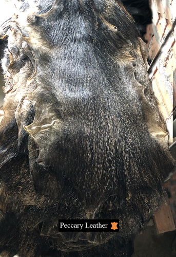 Raw Peccary Skin Front