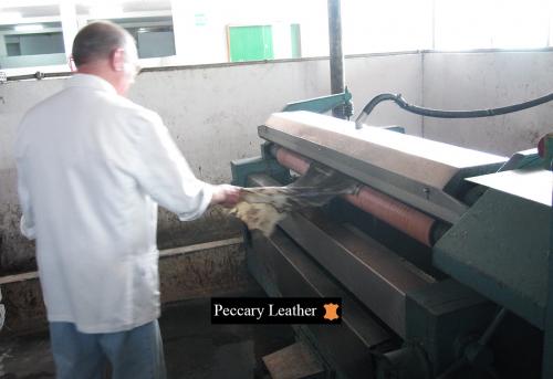 peccary Leder Rasieren