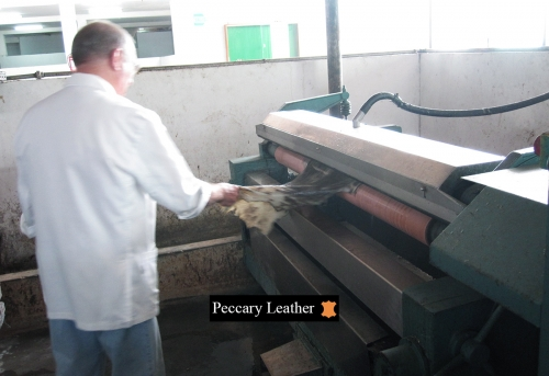 Pecari na Máquina de Desbaste