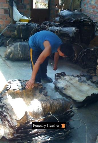 Secagem e Armazenamento de Peles de Pecari